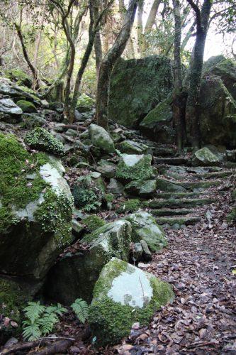 Paysage naturel de Higashisonogi, préfecture de Nagasaki : sentier dans la forêt