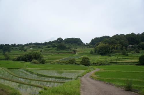 Les rizières en terrasse d'Inabuchi Tanada à Asuka (Nara), traversées par un petit sentier