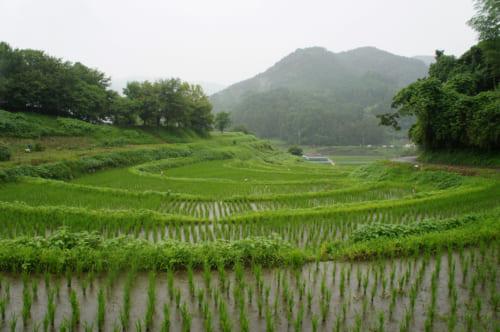 Asuka : vue des rizières en terrasse d'Inabuchi Tanada sous la pluie