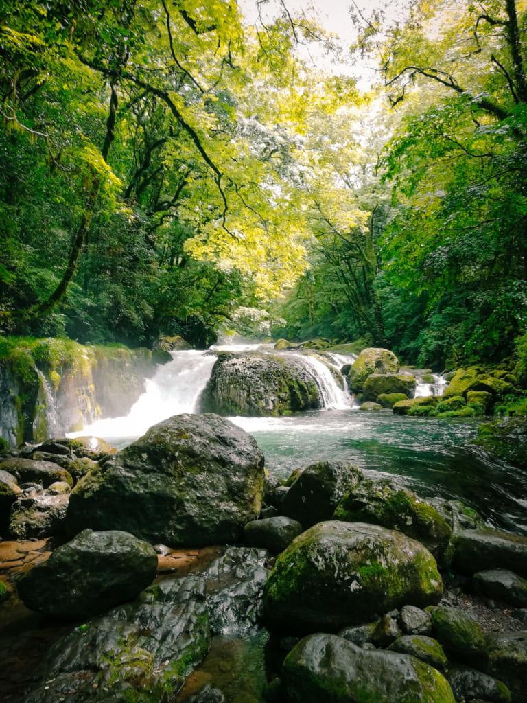 Une magnifique cascade au milieu de la forêt des gorges de Kikuchi