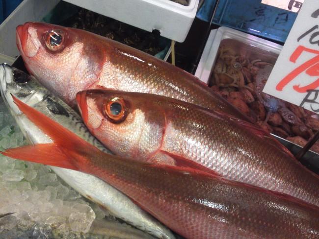fish,fresh fish,hachibiki,