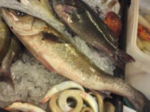 fish,fresh fish,suzuki,