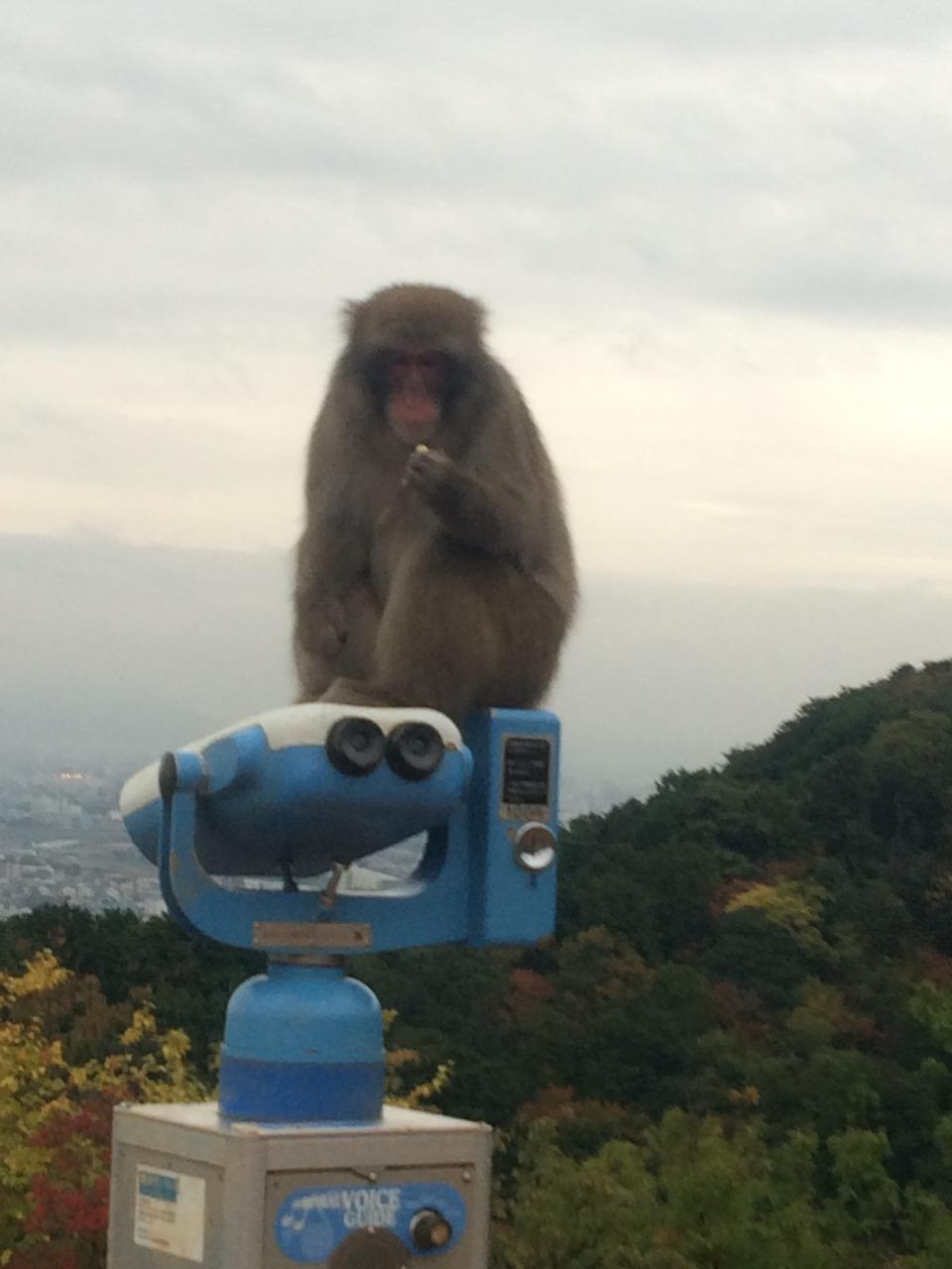 Visit the Monkeys of Kyoto's Arashiyama