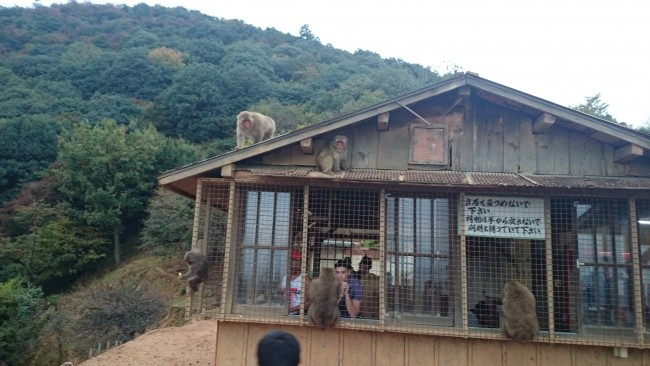 Arashiyama in Kyoto offers many acitvities like Iwatayama Monkey Park in Kyoto and temple