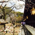 Kitano-Tenmangu Shrine's Plum Grove