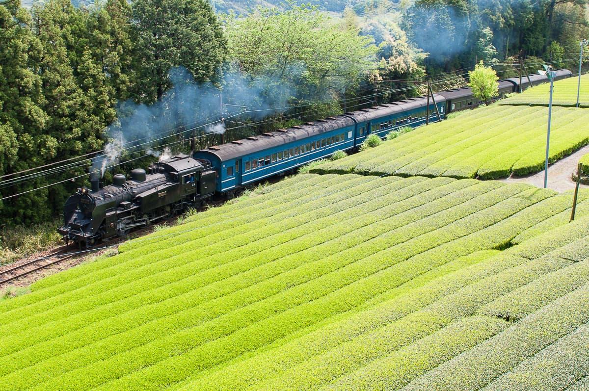 enjoy natural landscpae of Japan in Shizuoka Oigawa Railway train