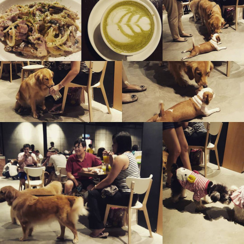 there appeared also dog cafe in japan where you can friendly play with dogs