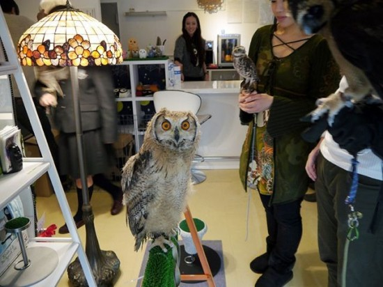 owls cafe is also popular among Japanese where owl will provide comfortable atmosphere