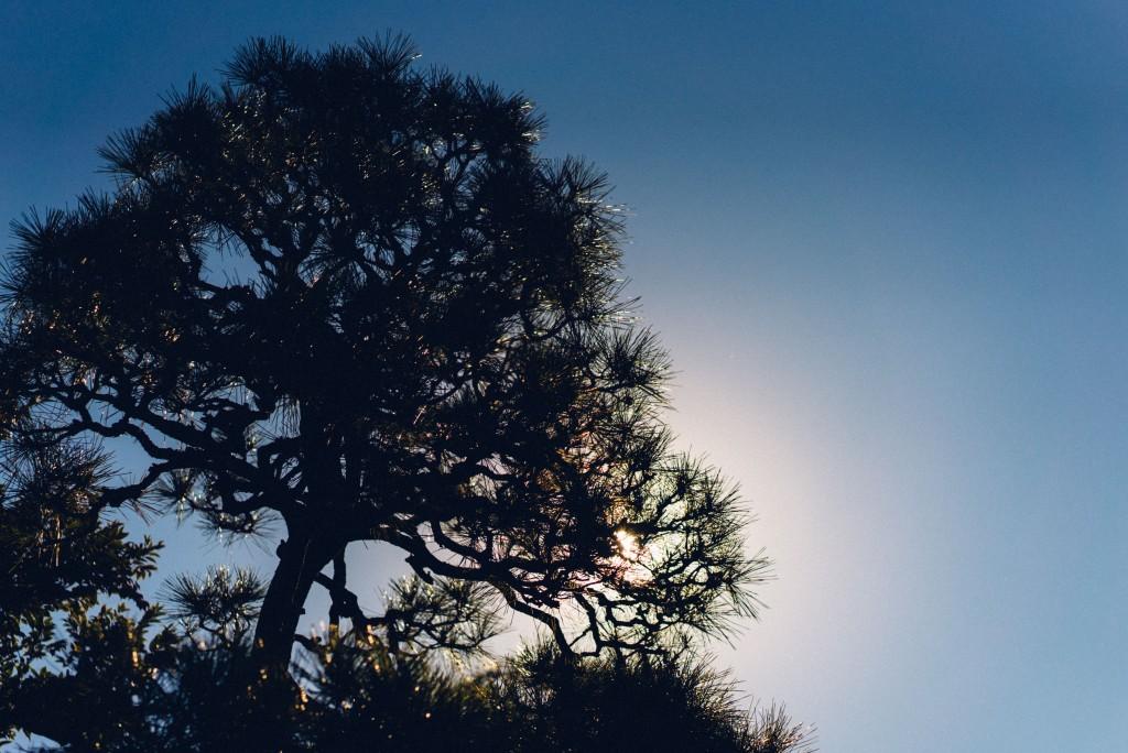 Day-trip: Enoshima nature