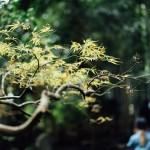 Kamakura stunning bamboo grove: Hokokuji Temple