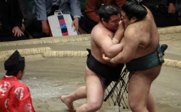 sumo,tradition,sport,tournament