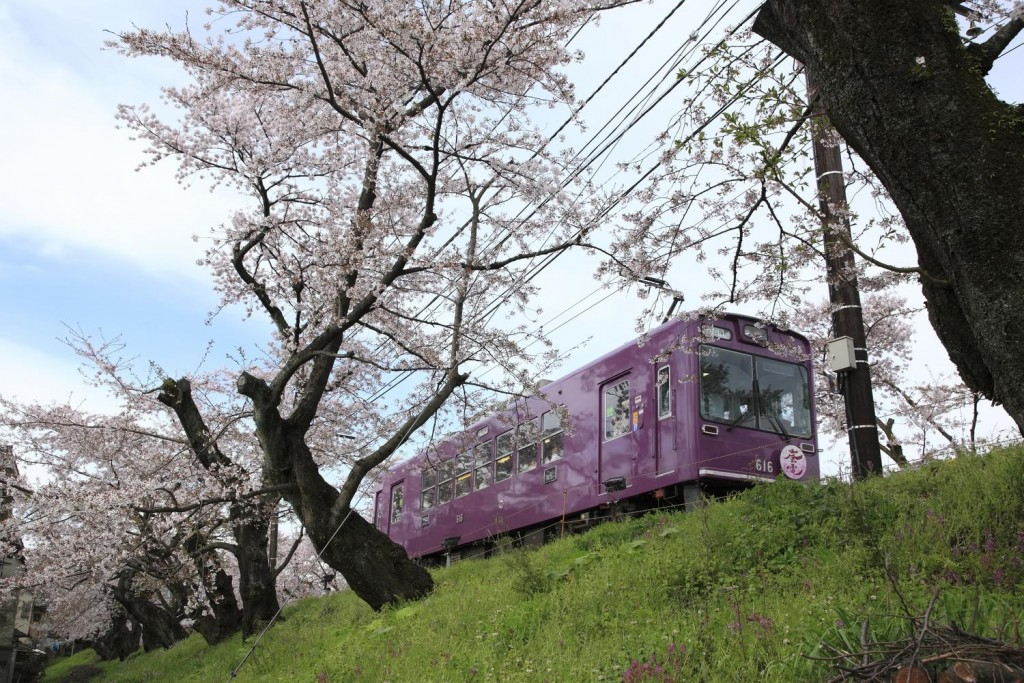 As spring approaches,you'll see picturesque scenery spreading local region in japan in particular while traveling by a local train