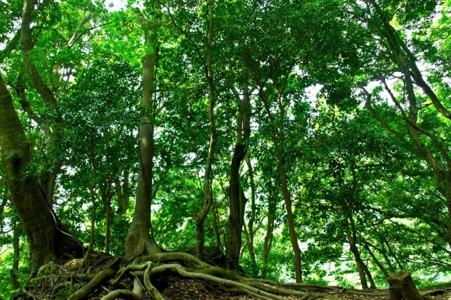 You feel tranquil and comfortable in a part of place of deep forest