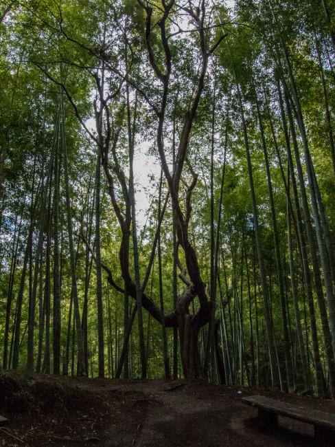 Soba Restaurant in Kamakura: Rai Tei surrounding bamboo forest