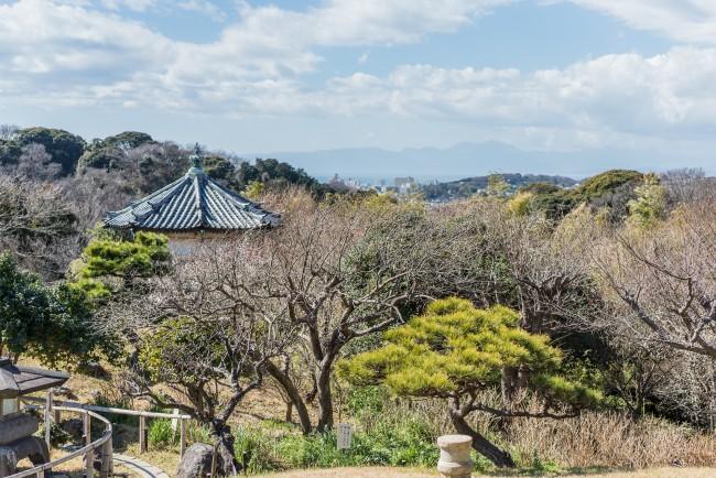 Soba Restaurant in Kamakura: Rai Tei outlooking view