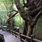 The Nature of Yakushima, the Alps of the Sea