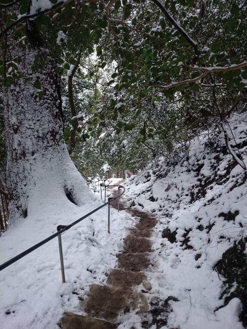 Beautiful hiking trail up the mountains near Kifune