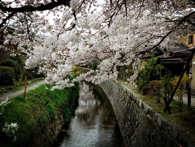 The canal becomes beautiful when the cherry blossoms are in bloom