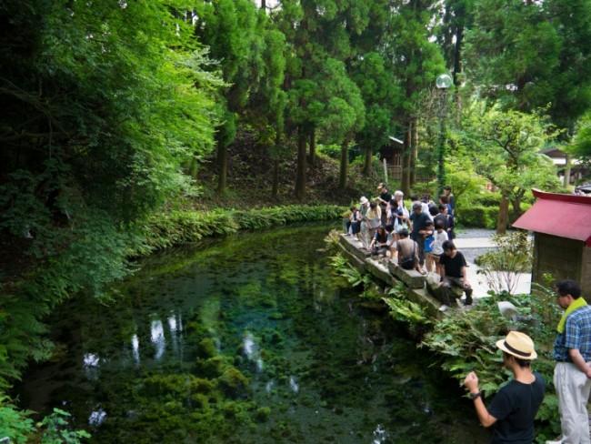 Shirakawa's water is famous for its amazing Nature beauty and clarity, straight from Aso Kumamoto