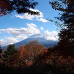 Aokigahara: Japan's Haunted Suicide Forest