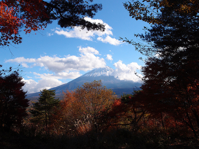 Aokigahara forest located around the base of Mt Fuji.