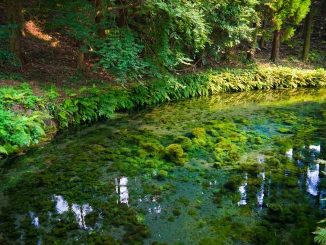 Shirakawa water surroundings are rich with pleasant Nature greenery from Aso Kumamoto