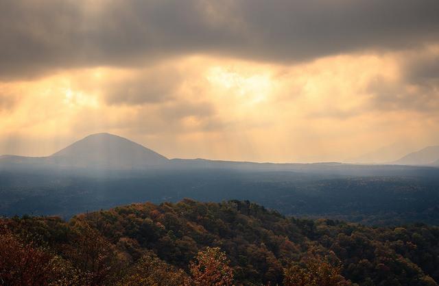 landscape of Aokigahara forest near Mt Fuji