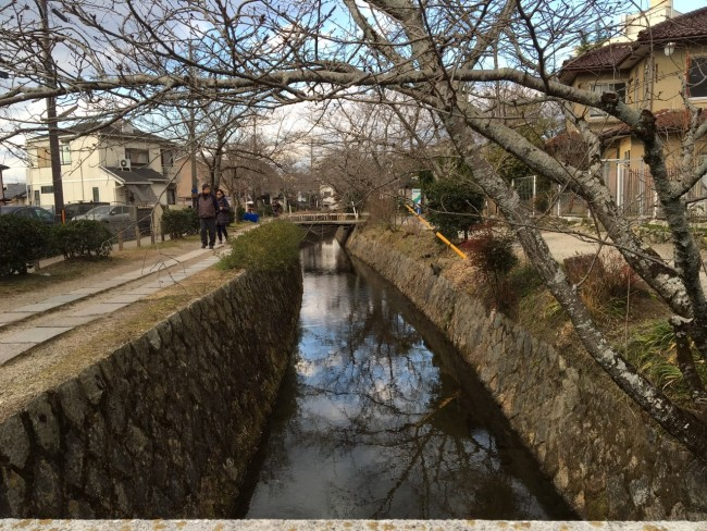 Sights walking the Kyoto Philosopher's Path: Cherry blossom trees without blossoms