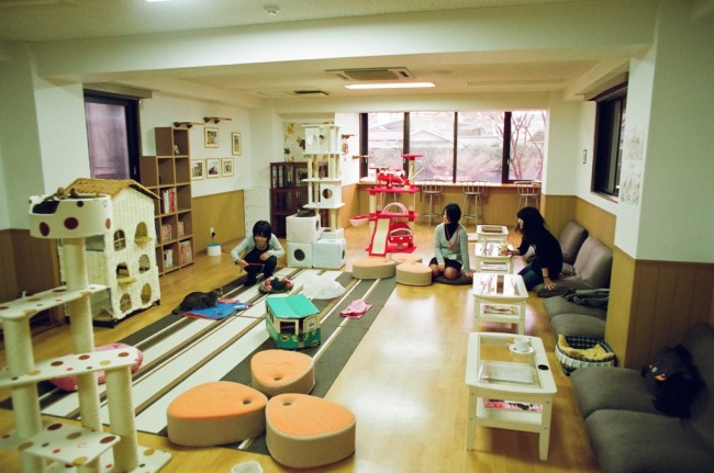 Here is a cat cafe where you can order a cup of drink and interact with cats as well