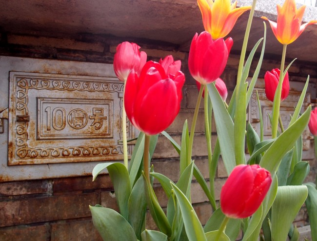 Rustic metal plates with flower bulbs, cafe Itsuki Garden terrace by Daibutsu hiking course, Kamakura
