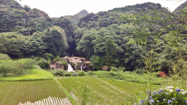 A waterfall sourrounded by nature past a field of vegetables in Kagoshima.