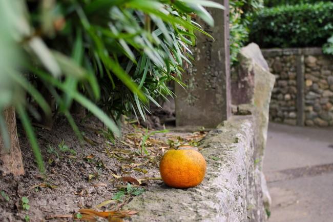 Mikan on cement at the heritage samurai village of Chiran.