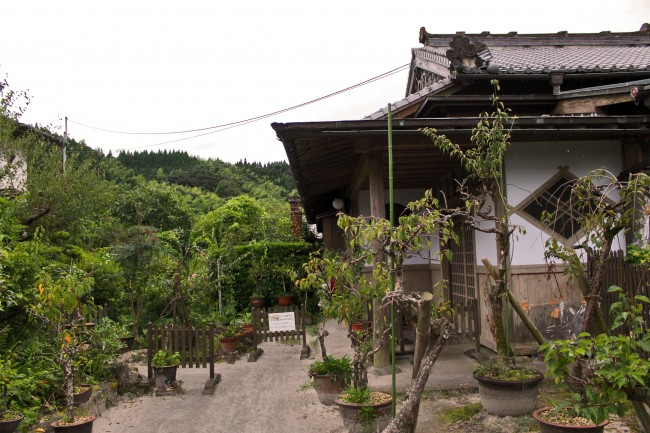 House plants of a house with samurai heritage in Chiran.
