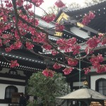 Why is Hasedera Temple a Kamakura cultural delight?