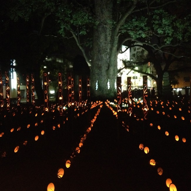 thousands of small paper lanterns line up the camphor tree in Hanabata Park for the Mizu Akari Festival in Kumamoto