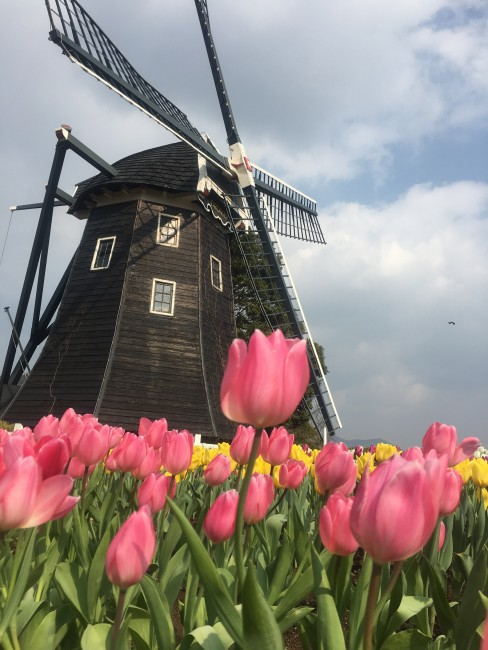 A picture of a windmill with flowers at Huis Ten Bosch.