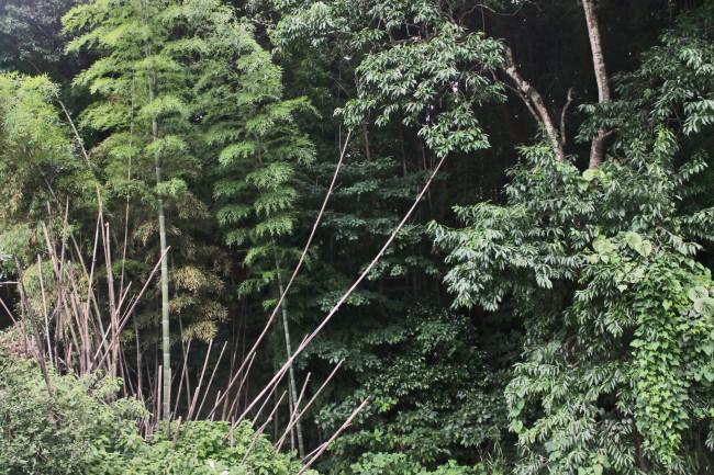 Dense nature before reaching Ryumondaki waterfall.