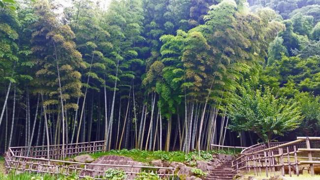 Kagoshima Sengan-en bamboo grove garden.