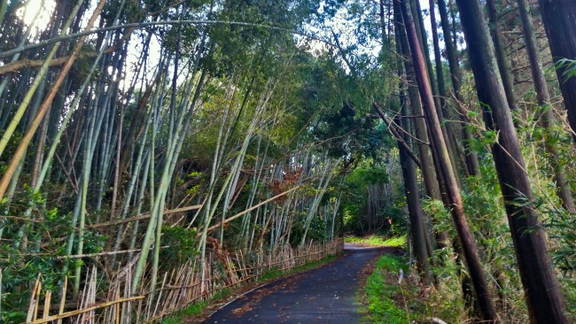 Tano Kansa - alleyway with bamboo growing on both sides.
