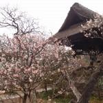 Tokeiji, Kamakura's Temple of Divorce
