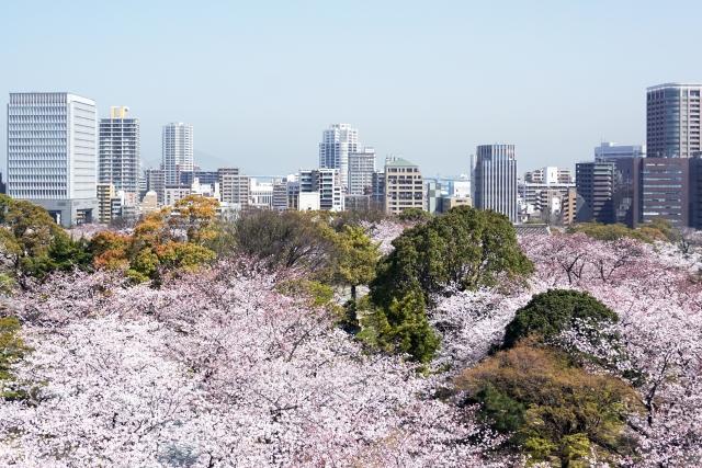 A view over Maizuru Park plus Fukuoka Castle filled with beautiful Fukuoka blossoms