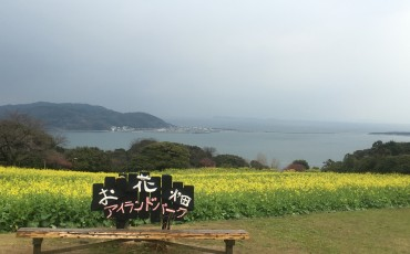 A bench with a sign with a large open area full of flowers behind it. Body of water far into the distance.