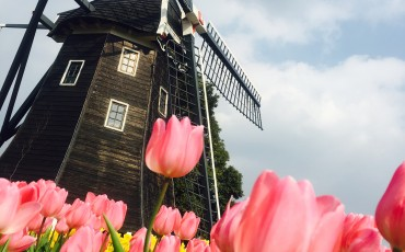 a picture of a windmill with flowers at Huis Ten Bosch..