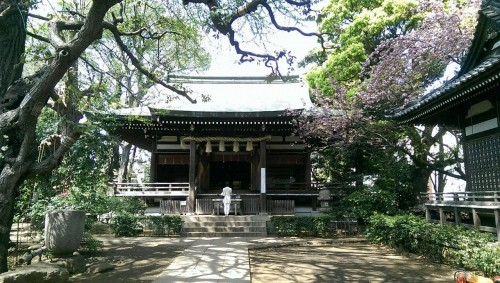 Main shrine at Okusawa shrine gate in Tokyo.