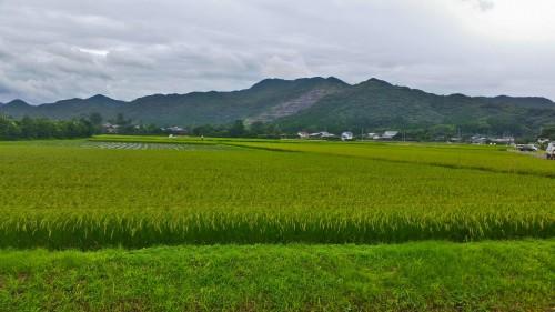 Kagoshima field