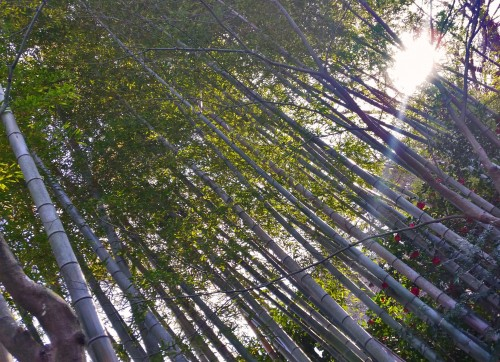 forest, Kagoshima
