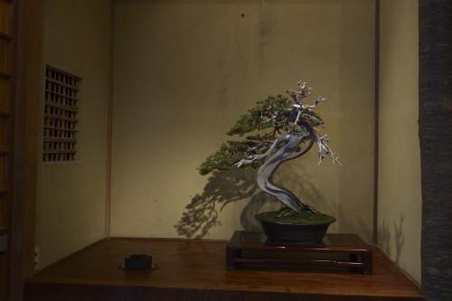 megijima bonsai at the Setouchi art Festival