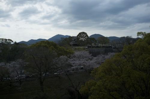 Kumamoto castle and it's cherry blossom trees
