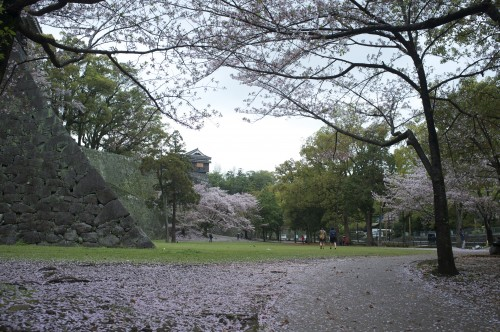 castle grounds covered in cherry blossom petals