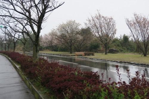 Road outside Sakurajima visitor center